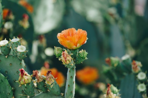 Wigwam cacti