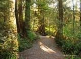 Wild Pacific Trail (20)