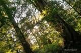 Wild Pacific Trail (21)