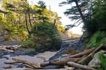 Wild Pacific Trail (25)