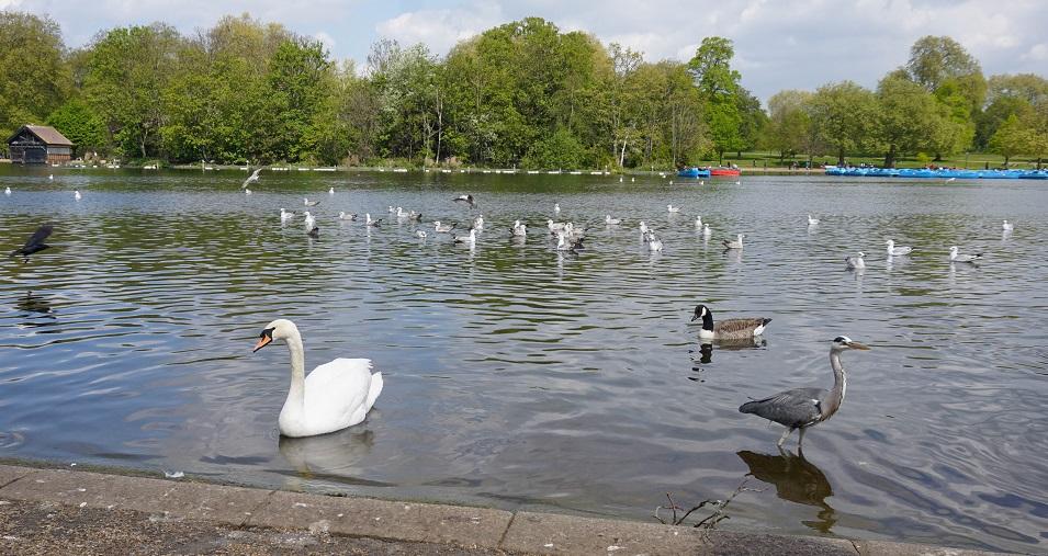 Meer in Hyde Park Londen