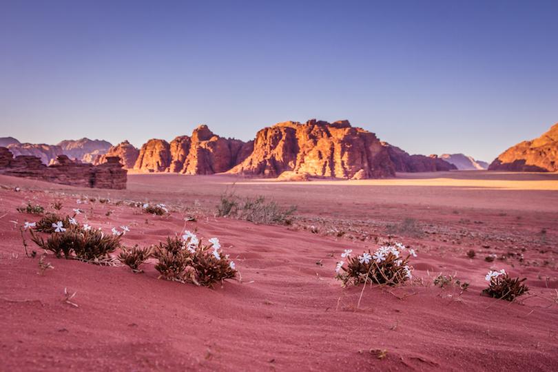 Spring Wadi Rum desert