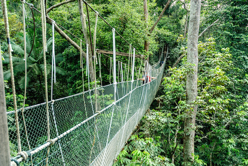 bridge canopy in the treetops of the trees in the forest of Taman Negara in Malaysia