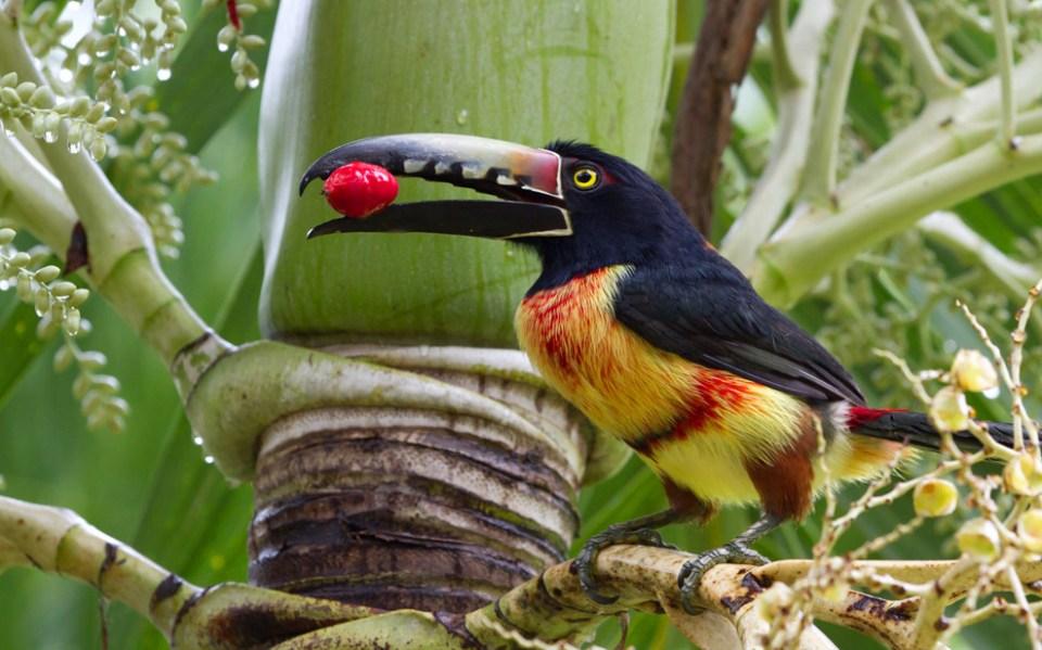 Hacienda AltaGracia Wildlife