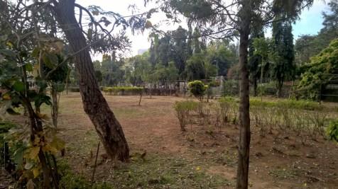 Running in Bengaluru