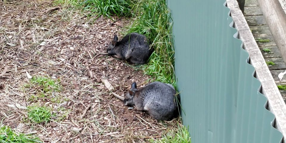Phillip Island Wildlife Park