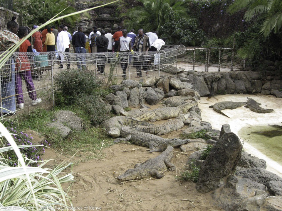 Must See Places In Nairobi Let The Safari Capital Of