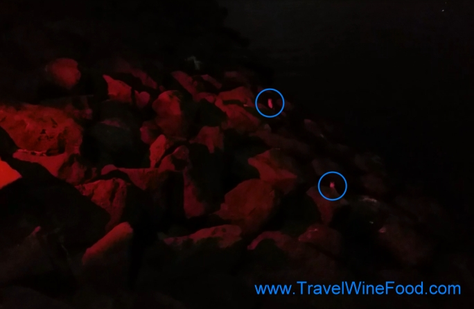 Penguins lit by red torchlight
