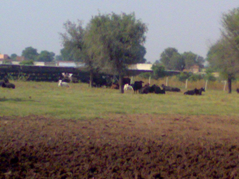 Dairy Farm, BITS,Pilani. India