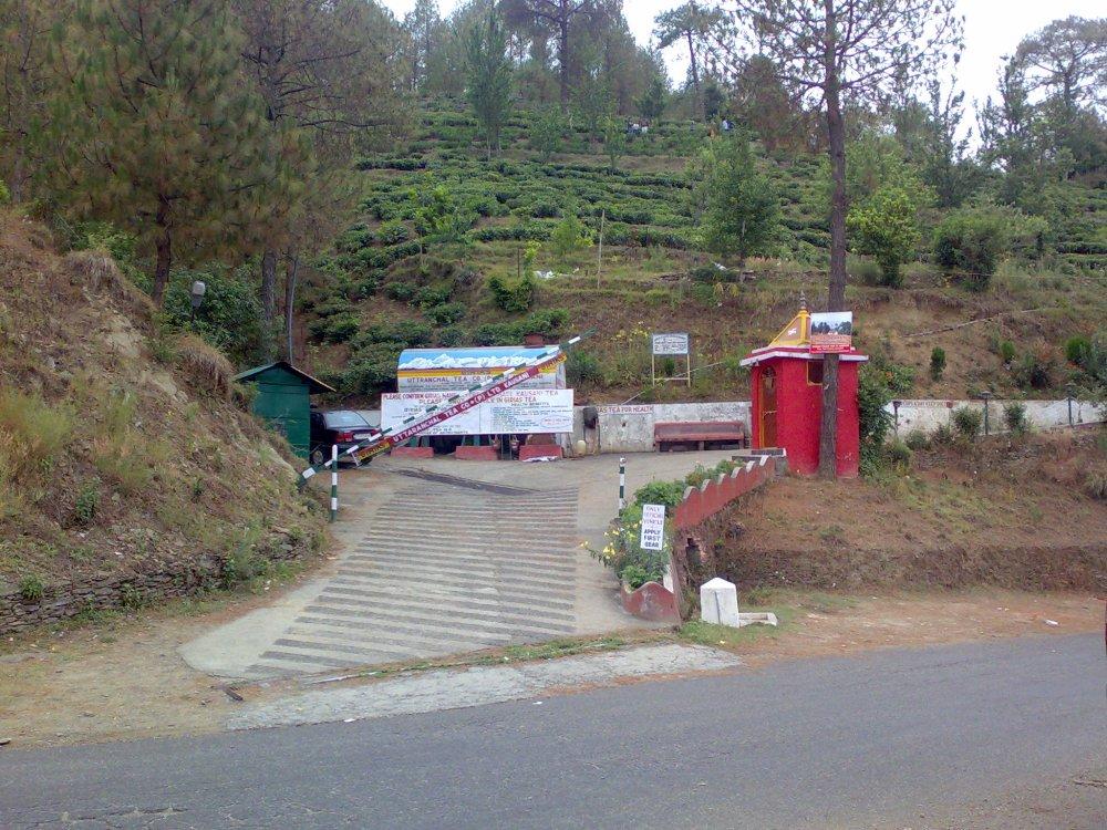 Kausani Tea Estate, Kausani, Uttarakhand, India