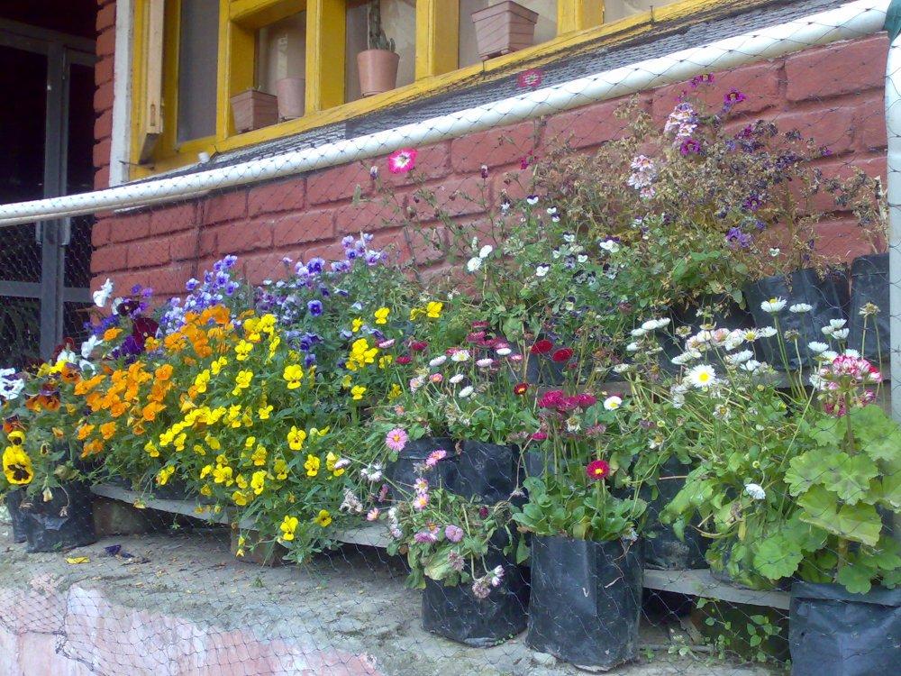 Mcleodgang Homestay, Mcleodgang, Himachal Pradesh, India