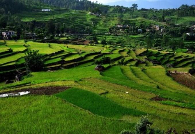 Kausani Tea Estate, Uttarakhand, India