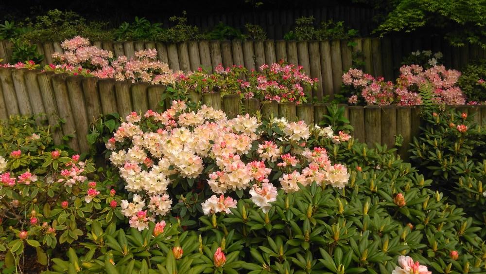 Flowers of London
