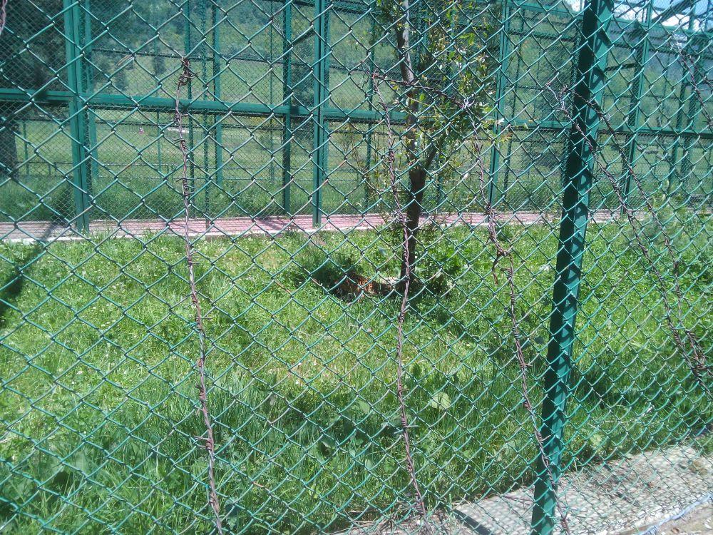 Zoological Garden, Pahalgam, Kashmir, India