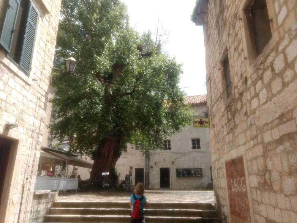 Cats Museum, Old Town, Kotor, Montenegro, Europe