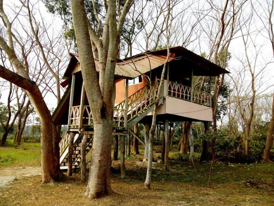Chilapata Forest Tree House