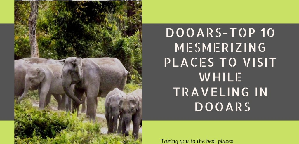 Top 10 Mesmerizing Places to visit while Traveling to Dooars