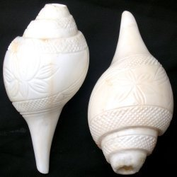 Conch Shell Carving
