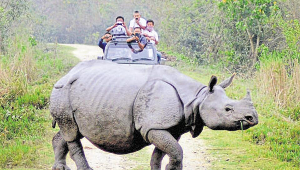 Shillong Cherrapunjee Kaziranga Tour Package