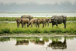 Assam Wildlife Tour 6N/7D-Manas,Nameri,Kaziranga