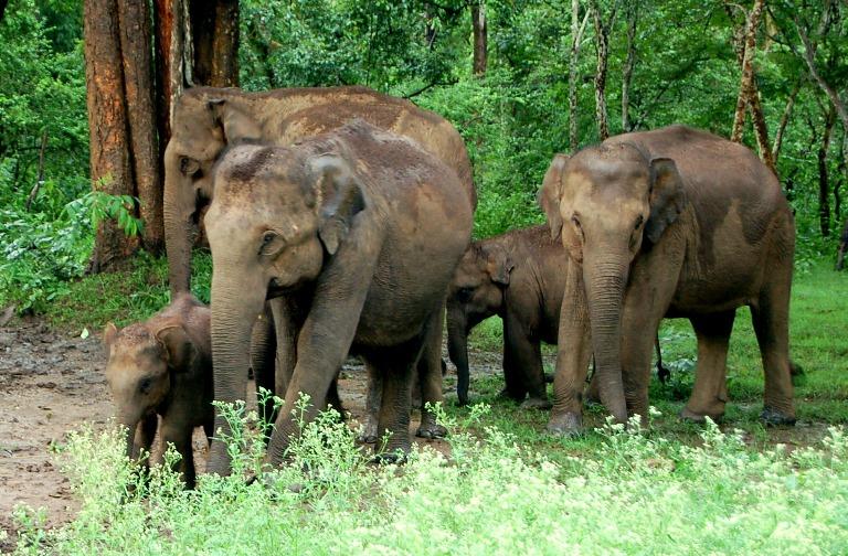 Gorumara Forest Retreat