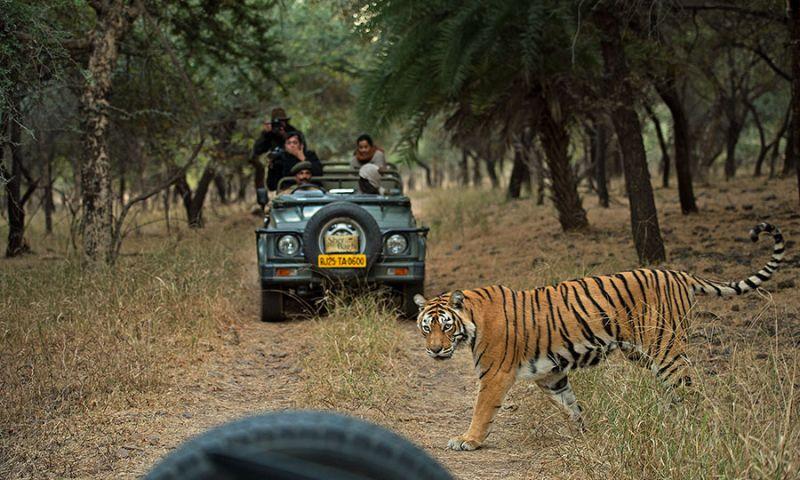 forest safari