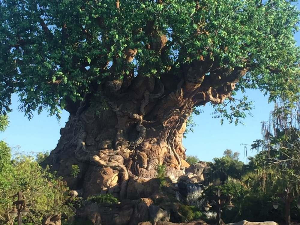 1 Day Animal Kingdom Itinerary | Disney | Travel with a Plan
