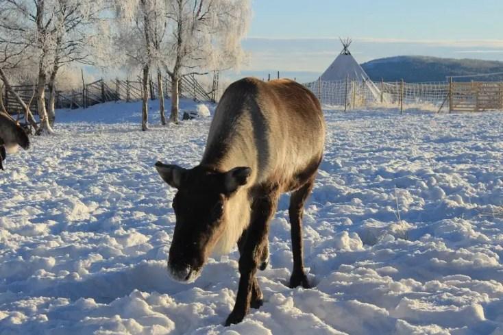 Reni, Kiruna, Laponia Suedeză