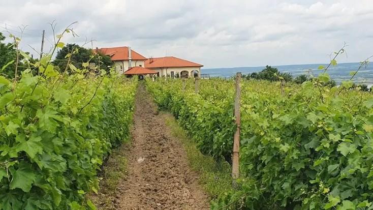 Crama Bauer și turismul viticol în România
