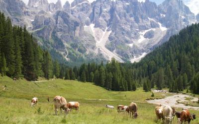Val di Fiemme: boschi che suonano, chef stellati e malghe da scoprire