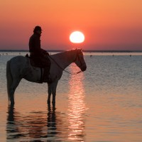 Perfect Dawn for a Horse Lover