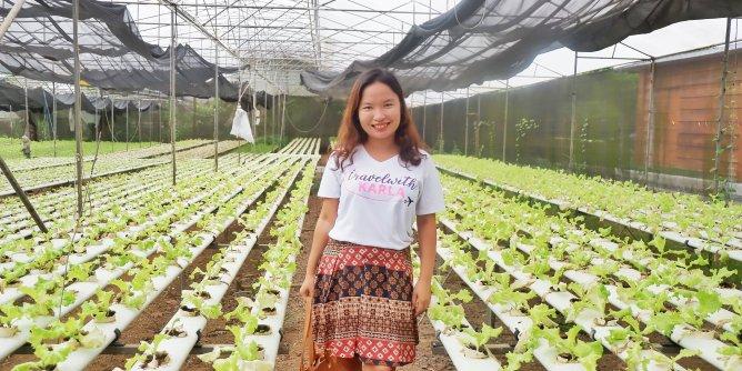 6 Reasons to Visit Yoki's Farm
