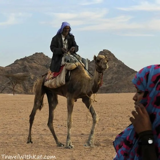 Bedouin camel rider