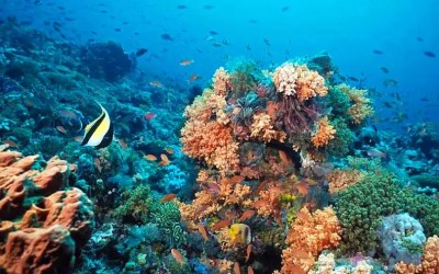Snorkelling in the Red Sea – Tarin Island