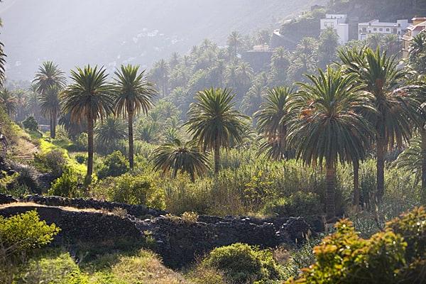 Parque Rural de Valle Gran Rey. La Gomera.