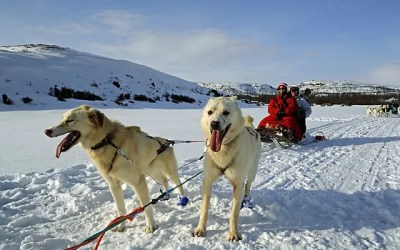 Racing along the frozen fjords with the huskies