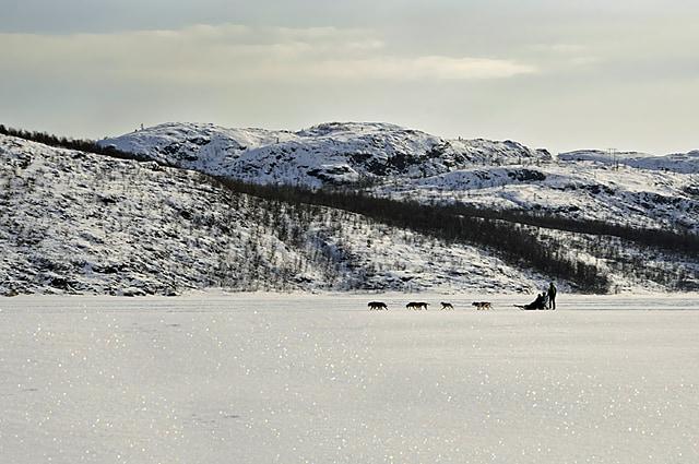 Husky dog sleding Norway