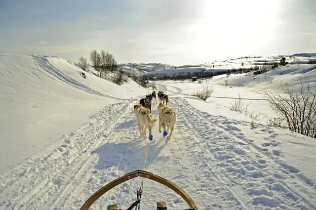 Kirkenes Huskies, Arctic Norway