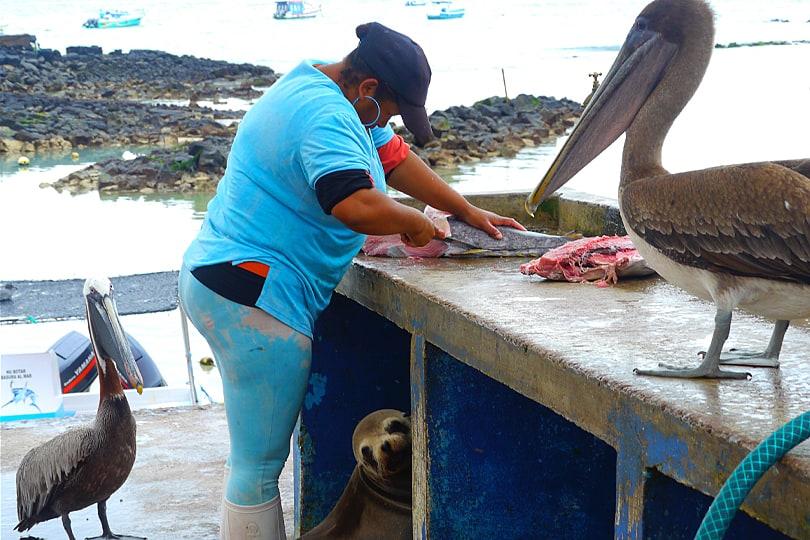 Puerto Ayora Fish Market, Santa Cruz, Galàpagos, Ecuador