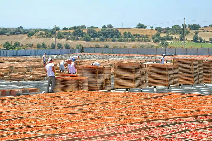 Sun dried tomatoes in Ispica, Sicily