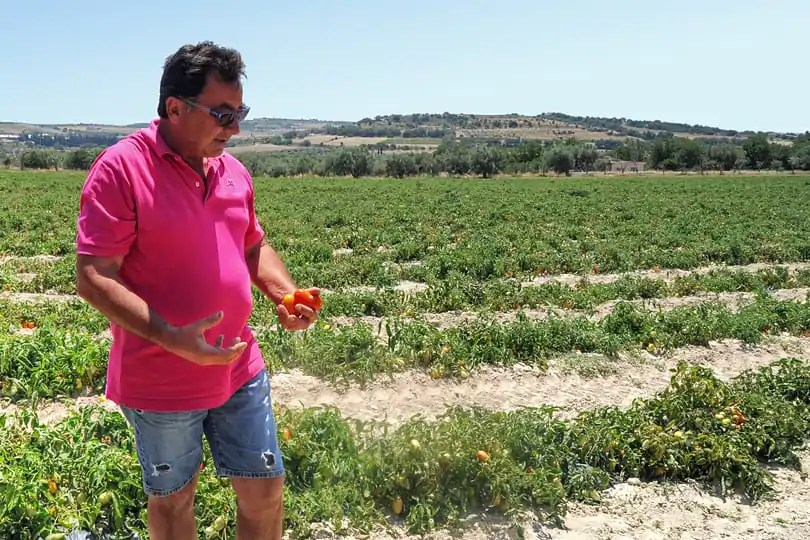 Giorgi with his tomatoes in Ispica, Sicily