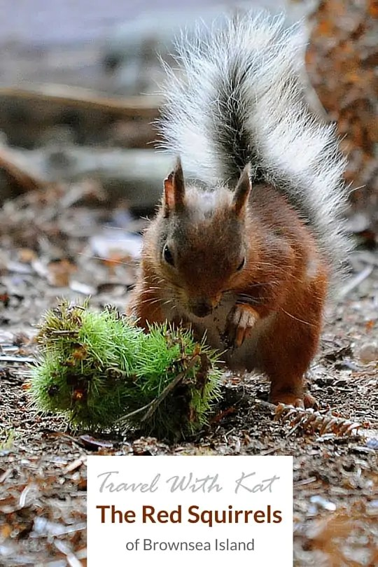Photographing the red squirrels of Brownsea Island, near Poole, in Dorset