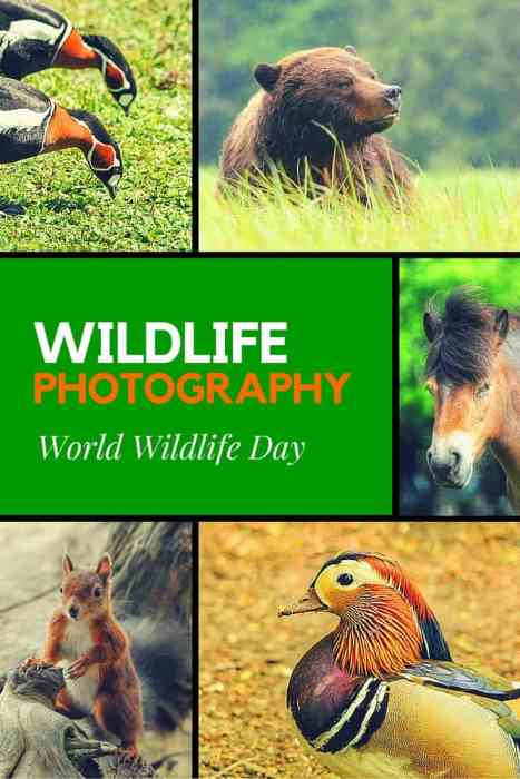 Celebrating World Wildlife Day with 20 favourite wildlife photographs