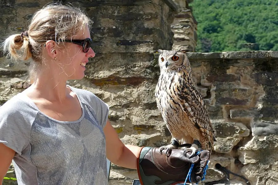 Birds of prey at the Medieval Festival in Viaden Castle