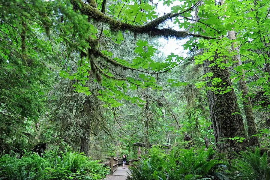 The ancient forest of Cathedral Grove, Vancouver Island, BC, Canada