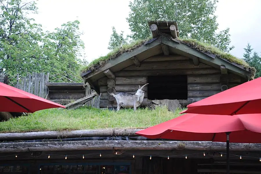 Goats on the Roof, Coombes, Vancouver Island, BC, Canada