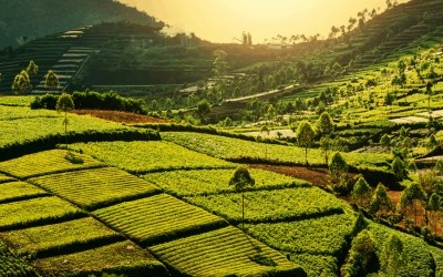 Top 10 reasons to visit Java