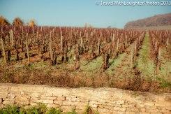 Wine Tour-4835