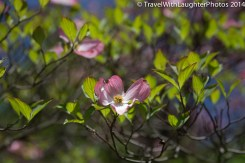 Doylestown Spring Flowers 2014-1188