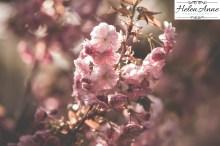 Doylestown Spring 2015-4708-26
